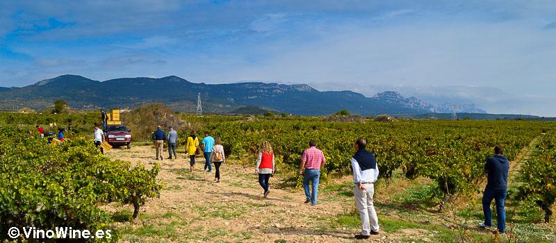 Visita a los viñedos de Bodega Contador