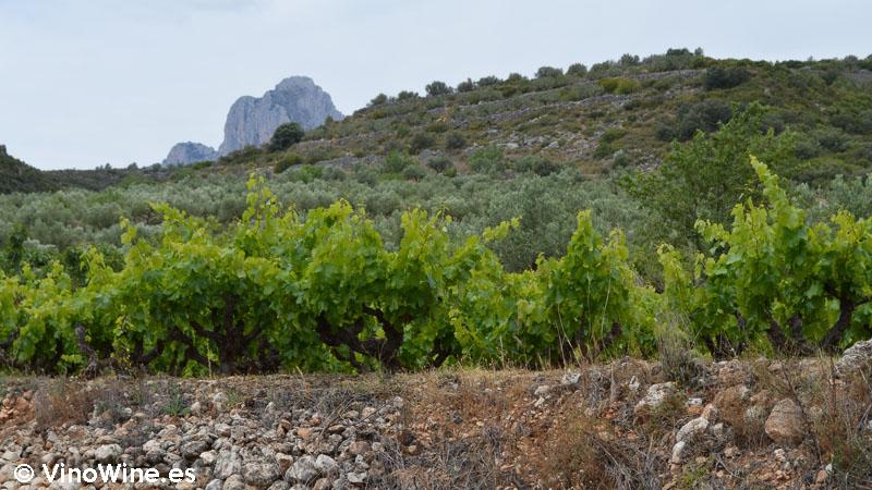 Abancalamiento en el viñedo del Celler la Muntanya