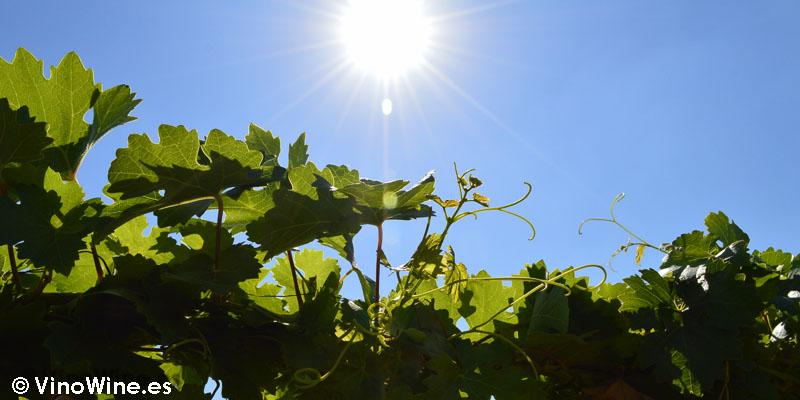 Caluroso día de julio en Finca el Chaconero de Enrique Mendoza