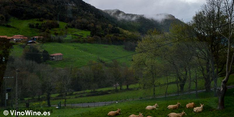 Paisaje desde el ventanal del Restaurante Solana de Cantabria