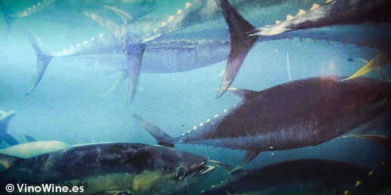 Ilustración de atunes del Restaurante El Campero de Barbate
