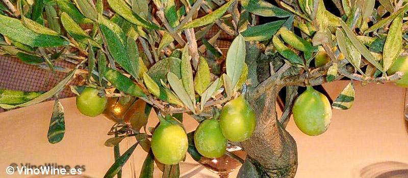 Helado de aceitunas verdes de El Celler de Can Roca