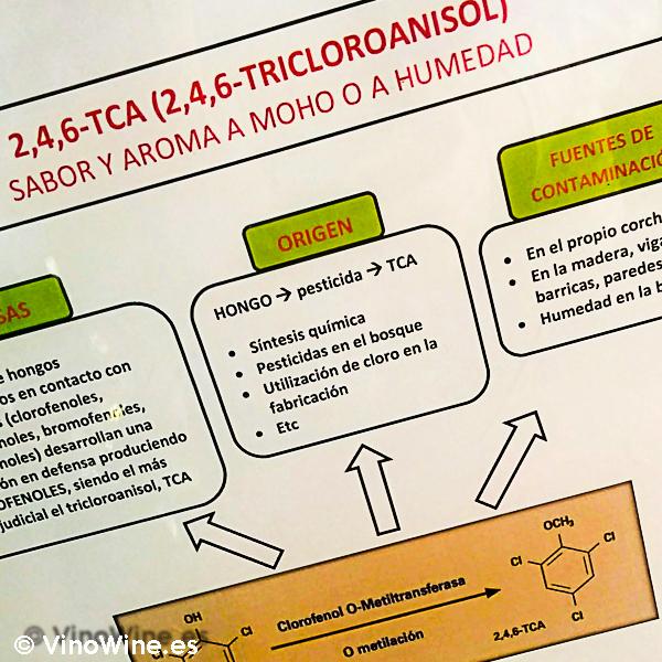 Taller práctico de cata de detección del Bouchone en la I Mendozas Wine Lovers Edition by Bodegas Mendoza