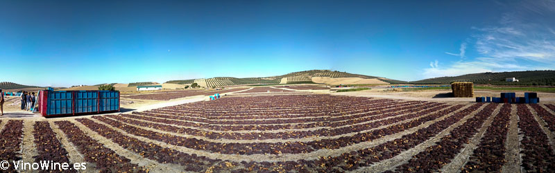 Panoramica de las paseras de Bodegas del Pino visitada en el Encuentro Verema Montilla Moriles